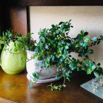 おしゃれな観葉植物のおすすめ通販ネットショップ│元気なグリーンを届けてくれる「e-花屋さん」