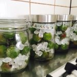梅ジュースの作り方簡単レシピ・冷凍梅(青梅)・氷砂糖・酢・瓶で子どもと手づくり