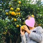 【北陸子連れおでかけ】みかん狩り・福井・敦賀のおすすめ下野みかん園(フルーツ狩り)